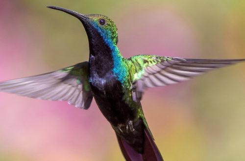 "Sandro Veronesi ""Il colibrì"""
